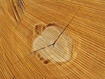 切片木木材,细节,宏指令 库存图片
