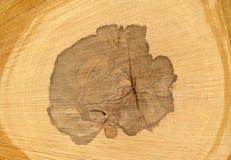 切片木木材,细节,宏指令 免版税库存照片