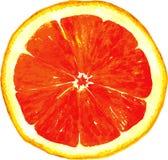 切片由水彩的葡萄柚图画 向量例证