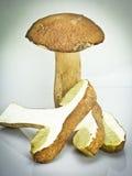 切的大棕色牛肝菌蕈类蘑菇 库存照片