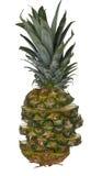 切的新鲜菠萝 库存图片