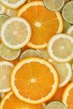切的桔子、柠檬和石灰背景的汇集 免版税库存照片