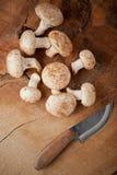 切的蘑菇 图库摄影
