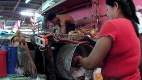 切细与动力化的剃具的妇女椰子推测一个典型的人` s工作增添家庭收入 影视素材
