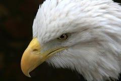 切记的第11 9月 免版税库存图片