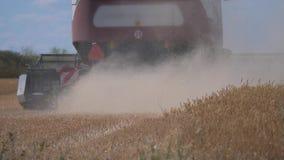 切麦子的联合收割机 r 农业收获概念 在领域的联合收获的金黄 股票录像