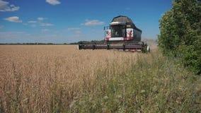 切麦子的联合收割机 r 农业收获概念 收获在领域的组合生活方式 股票录像