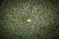 划分为的叶子在秋天 库存照片
