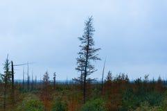 划分为的叶子结构树 免版税库存照片