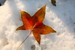 划分为的叶子雪 免版税库存图片