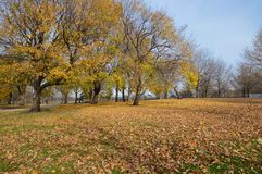 划分为的叶子 免版税图库摄影