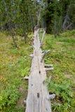 划分为的林木 免版税库存照片