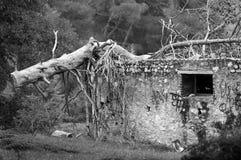 划分为的树干 免版税图库摄影