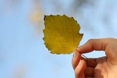 划分为的现有量叶子 免版税图库摄影