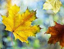 划分为的秋叶 库存照片
