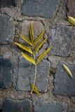 划分为的秋天叶子 库存照片