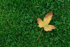 划分为的秋天叶子 库存图片