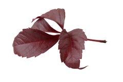 划分为的秋天叶子 免版税库存图片