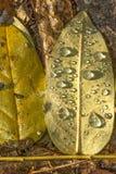 划分为的秋天湿叶子 免版税库存照片
