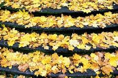 划分为的秋天留下楼梯 免版税库存照片