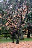 划分为的秋天长凳五颜六色的舍去离开公园结构树 库存照片