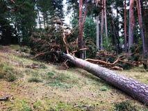 划分为的结构树 免版税图库摄影