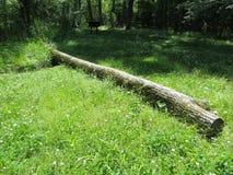 划分为的结构树 图库摄影