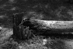 划分为的结构树 免版税库存图片