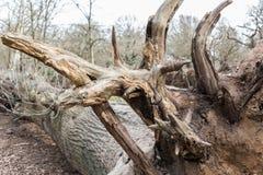 划分为的结构树 库存图片