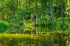 划皮船由狂放的河在波兰(Omulew河) 图库摄影