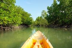 划皮船通过美洲红树森林 库存照片