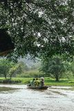 划船妇女行有游人的一条小船在树下分支的河的在的Trang的洞穴在Ninh Binh,越南 库存照片