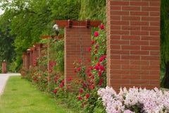 列使玫瑰色环境美化 库存照片