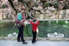系列在动物园里 免版税库存照片