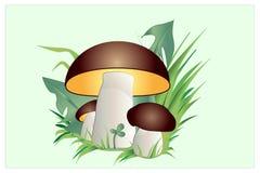 系列研了许多蘑菇那里 免版税图库摄影