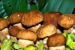 系列研了许多蘑菇那里 免版税库存图片