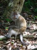 系列猴子s 免版税库存图片