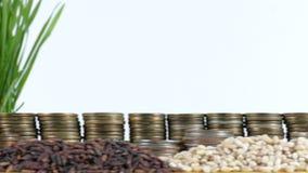 刚果共和国沙文主义情绪与堆金钱硬币和堆麦子 股票视频