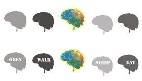 创造性的头脑 库存图片