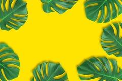 创造性的布局夏天热带叶子舱内甲板放置构成 绿色回归线留给框架拷贝空间在淡色橙色背景 免版税库存照片