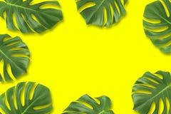 创造性的布局夏天热带叶子舱内甲板放置构成 绿色回归线留给框架拷贝空间在淡色黄色背景 免版税库存照片