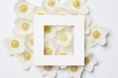 创造性的布局由五颜六色的春天花制成 免版税库存图片