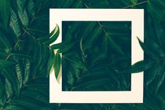 创造性的布局由五颜六色的秋天秋天制成离开与白色框架 库存照片