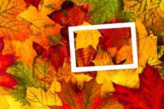 创造性的布局由五颜六色的秋天秋天制成离开与白色空的框架 库存照片