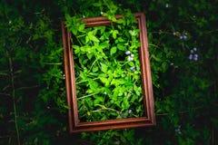 创造性的布局由在darklight的木框架和绿色叶子,布局设计制成由自然和紫色领域 图库摄影