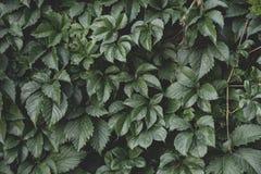 创造性的布局由绿色叶子制成 平的位置 背景蓝色云彩调遣草绿色本质天空空白小束 免版税图库摄影
