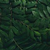 创造性的布局由绿色叶子制成 平的位置 概念查出的本质白色 免版税库存图片