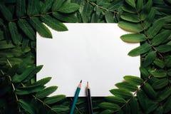 创造性的布局由绿色叶子制成 平的位置 概念查出的本质白色 库存照片