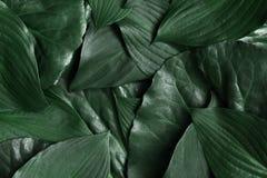 创造性的布局由绿色叶子制成 平的位置 背景蓝色云彩调遣草绿色本质天空空白小束 库存照片