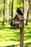 创造性的手工制造木鸟房子/鸟饲养者与站立在一根杆的两只鸠在公园 免版税库存图片